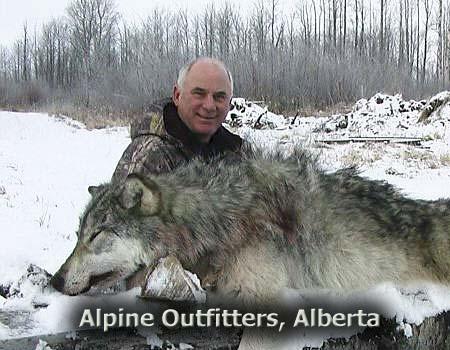 1-wolf