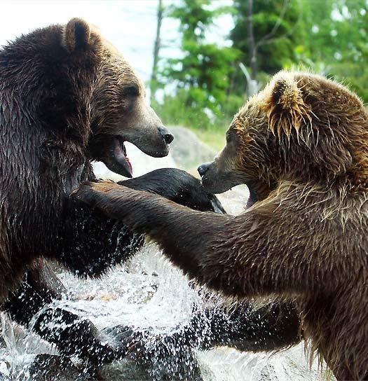 Alaska Brown Bear Hunting