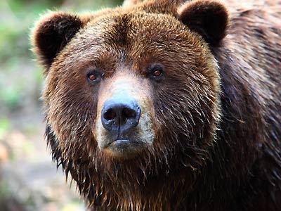 british-columbia-bear-hunting-guides