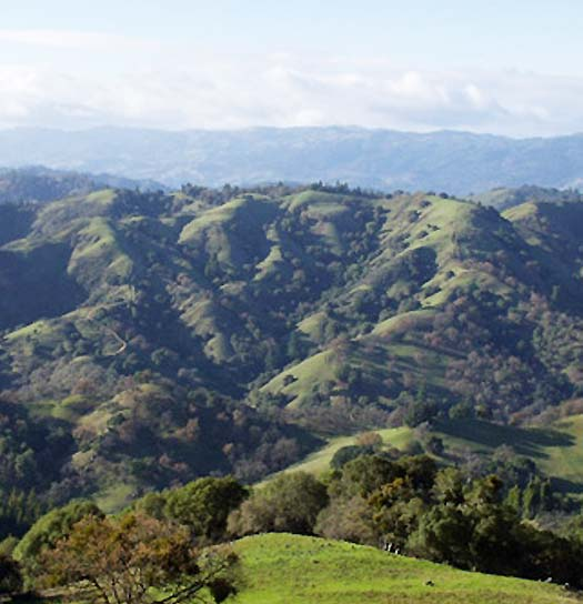 Sonoma County, California - Incredible place to hunt hogs and blacktail deer