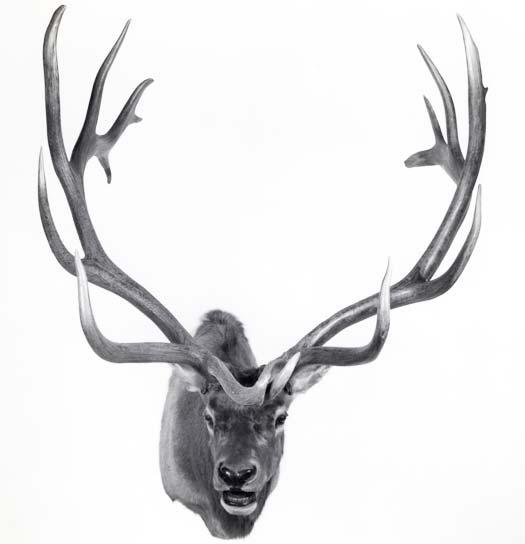 #12 Record Book Elk
