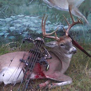 Haun Ranch - Texas Hunting Guide