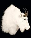 hunt mountain-goat