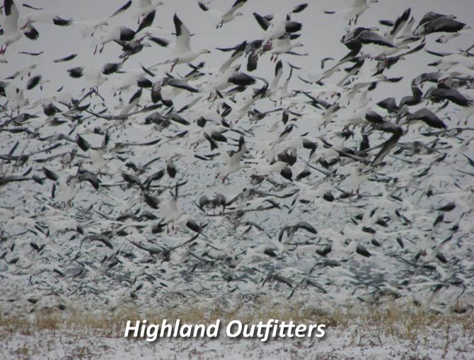Saskatchewan Waterfowl Hunts