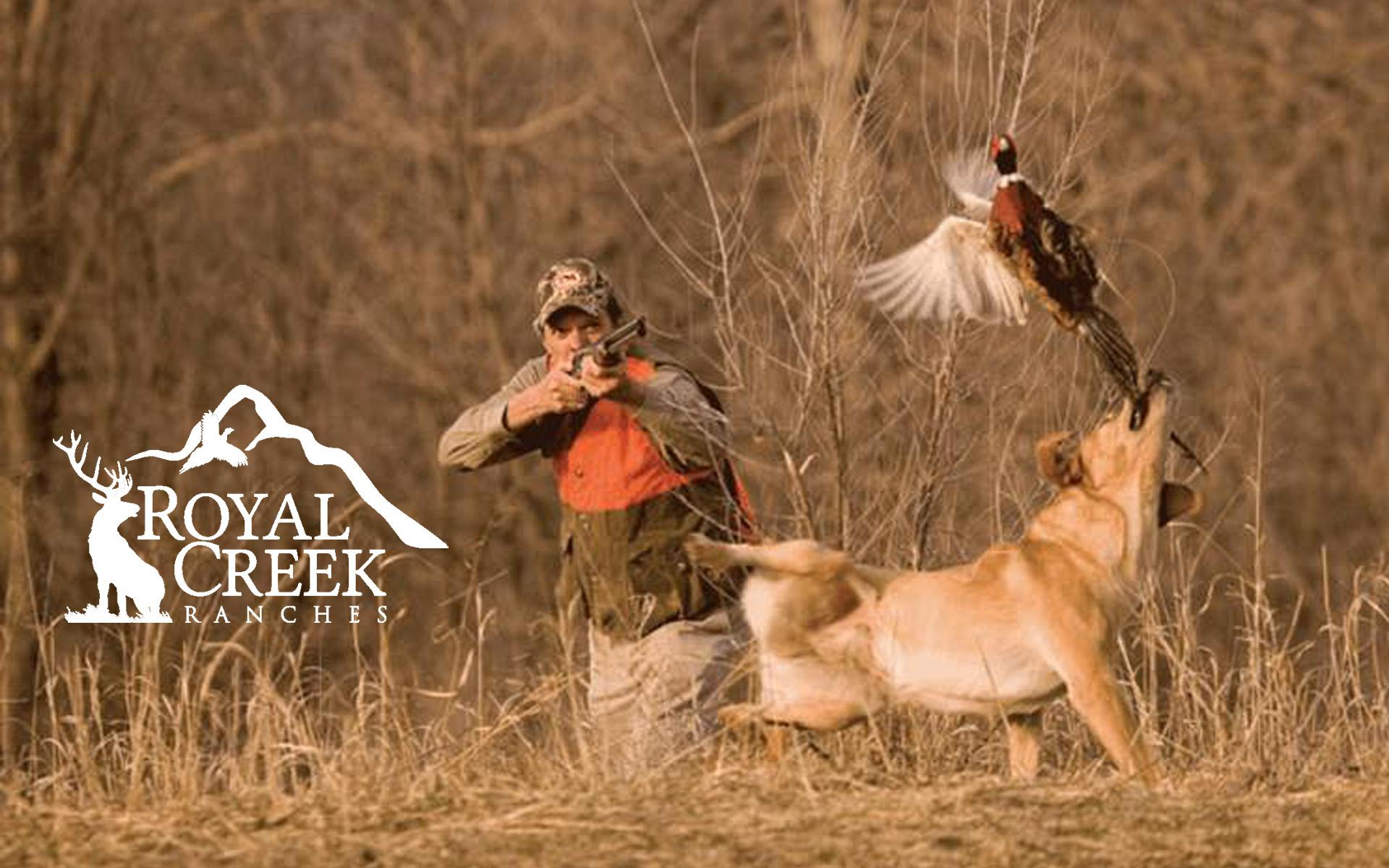 Elk and Pheasant Hunting – Royal Creek Ranches