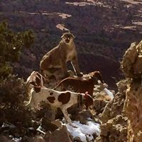 Old West Guides and Outfitters – New Mexico – South Dakota – Arizona